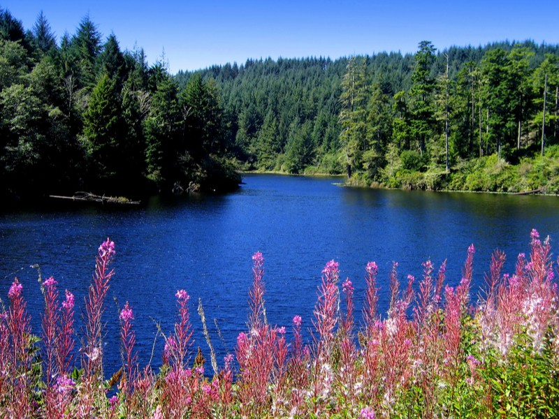 Cove near Gardiner, Oregon with pink wildflowers