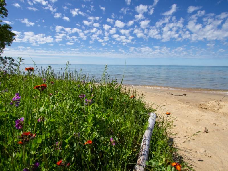 Sunny sandy beach with wildflowers - Lake Michigan coast in the Upper Peninsula of Michigan