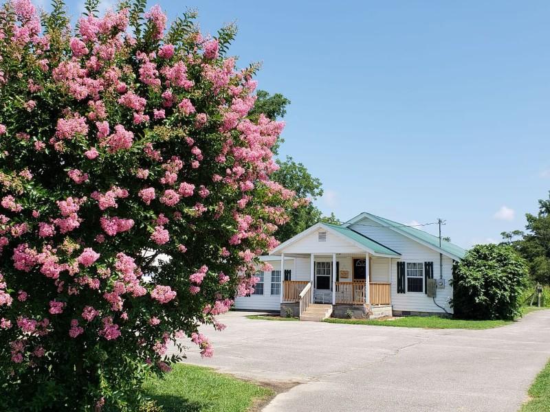 Flower at the Cotton Pickin' Little Farmhouse