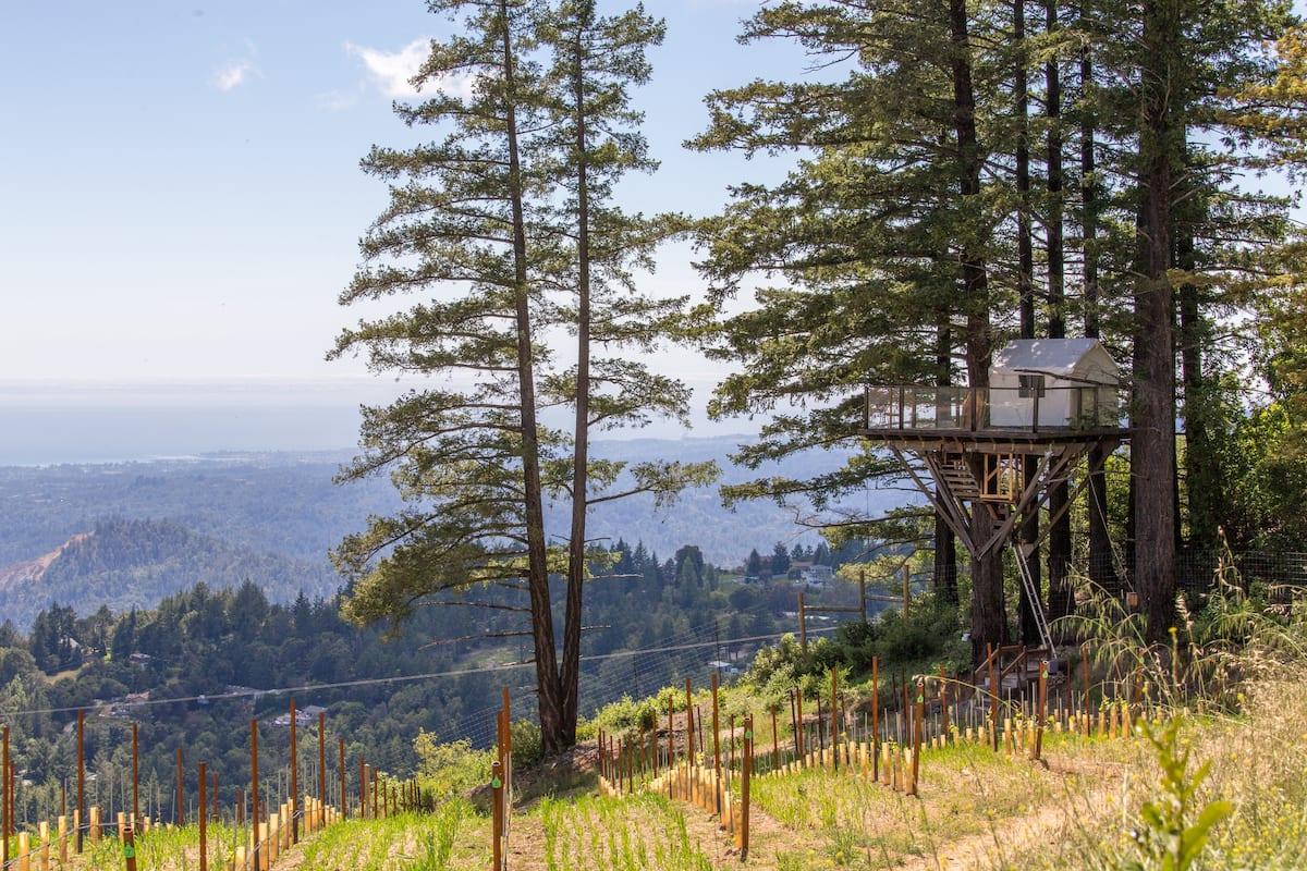View of Treehouse in Vineyard Overlooking Monterey Bay